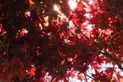 Cobertura del árbol Fotografía de archivo libre de regalías