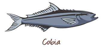 Cobia, Color Illustration Royalty Free Stock Photos