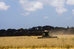 Cobine que cosecha el campo de trigo Fotos de archivo libres de regalías