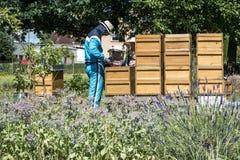 05 07 Coblenza 2017 Alemania - niños de enseñanza del apicultor en abejas de observación de la colmena Abejas en los panales Capí Imagen de archivo libre de regalías