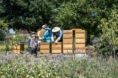 05 07 Coblenza 2017 Alemania - niños de enseñanza del apicultor en abejas de observación de la colmena Abejas en los panales Capí Imagen de archivo