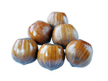 Cobnuts. Six cobnut in the white background Royalty Free Stock Image