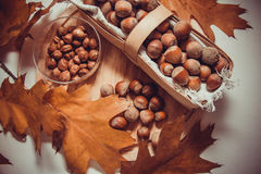 Cobnuts. Harvest of hazelnuts, source of protein Stock Images