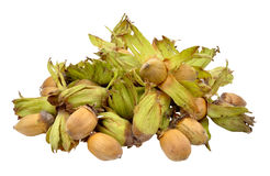 Cobnuts Isolated On White Stock Photography