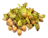 Cobnuts Isolated On White. Group of Autumn cobnuts isolated on a white background Royalty Free Stock Photos