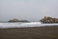Cobquecura Coast, Chile. Marine habitat on the beach in front of Cobquecura, Chile royalty free stock photo