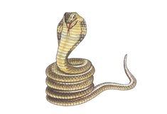 Cobra libre illustration