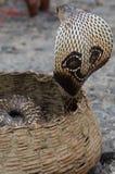 Cobra Imagem de Stock