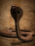 The Cobra Royalty Free Stock Images