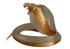 COBRA Royalty Free Stock Images
