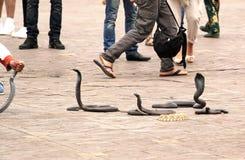 Cobra da eseguire Fotografia Stock Libera da Diritti