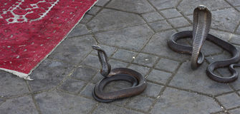 Cobra dangereux Images stock