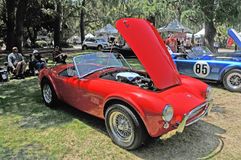 Cobra di Shelby Fotografia Stock