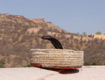Cobra in fakir`s basket against Amer Fort Stock Photos