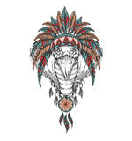 Cobra in the Indian roach. Indian feather headdress of eagle Royalty Free Stock Photos
