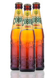 Cobra Premium beer on a white background Royalty Free Stock Photography
