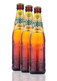 Cobra Premium beer on a white background Stock Photos