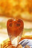 Cobra real en la cesta la India Imagen de archivo