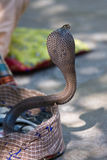 Cobra real, la India Imagen de archivo