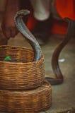 Cobra's in een mand Royalty-vrije Stock Afbeeldingen