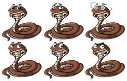 Cobra snakes with different emotions Stock Photography