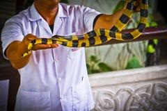 The cobra spread the hood. The albino cobra spread the hood is on the floor and cobra snake is fierce stock photos