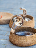 Cobras στα καλάθια Στοκ εικόνα με δικαίωμα ελεύθερης χρήσης