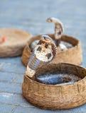 Cobras nas cestas imagem de stock royalty free