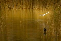 Cobre del otoño en el lago y pájaros Imagen de archivo