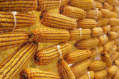 Cobs Stock Photo