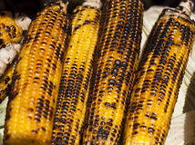 Cobs of corn Royalty Free Stock Photo