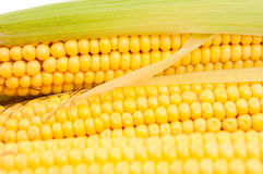 Cobs corn Royalty Free Stock Images