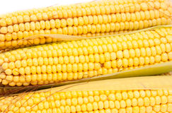 Cobs corn Royalty Free Stock Photos