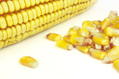 Cobs and corn. Beans and corn cobs on a white background Royalty Free Stock Images