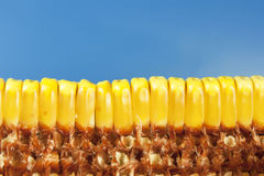 Cobs and corn. Beans and corn cobs on a blue background Royalty Free Stock Photos
