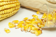Cobs and corn. Beans in a glass and corn cobs Royalty Free Stock Photography