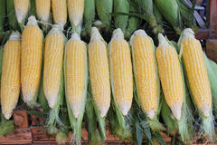 Cobs corn Stock Photography