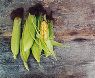 Cobs fresh corn on old wooden surface Royalty Free Stock Photo