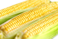 Cobs of fresh summer corn Stock Photography