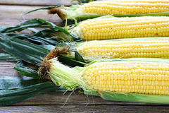 Cobs fresh sweet corn on the boards Stock Images