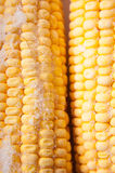 Cobs Stock Photography