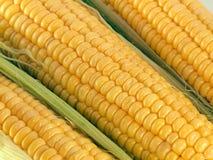 cobs kukurydza Obrazy Stock