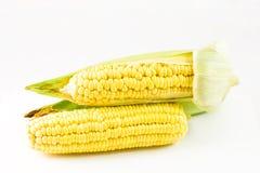 cobs kukurydzani Zdjęcie Stock