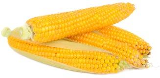 cobs kukurydzani Zdjęcie Royalty Free