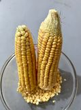 Cobs of the maize Stock Photo