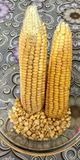 Cobs of the maize Stock Images