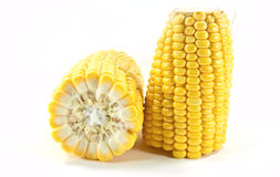 Cobs Of Sweet Corn Royalty Free Stock Image