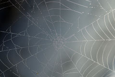 Free Cobweb Royalty Free Stock Photos - 10173038