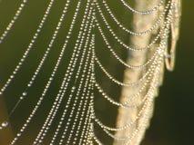 cobweb Arkivfoton