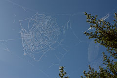 Free Cobweb Stock Photo - 16323950
